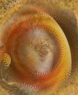 Suncircle